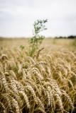 Fotos af dansk landbrug.